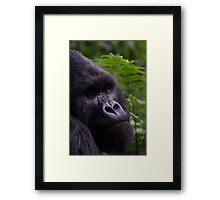 Mountain Gorilla Portrait Framed Print