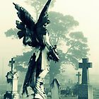 angel wings by natalie angus