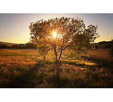 Tree 'O' Gold Photographic Print