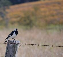 Little bird on a wire by Paul Crack