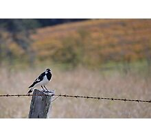 Little bird on a wire Photographic Print