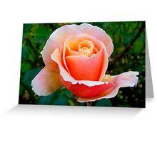 Winter Peach Rose Greeting Card
