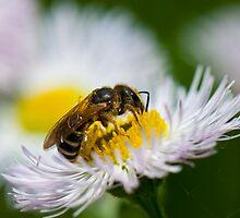 Honey Processor by Richard Lee