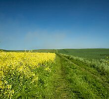 Yellow-Blue-Green. by Kit347
