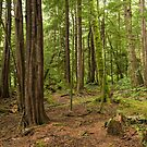 Great Bear Rainforest by SusanAdey