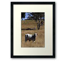 Brahman Bull Framed Print