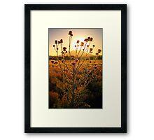 ThistleAbra Framed Print