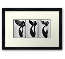 Scanpan Triptych Framed Print