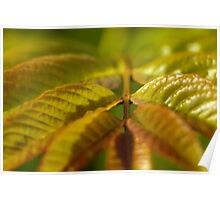 Ash Tree Leaves Poster