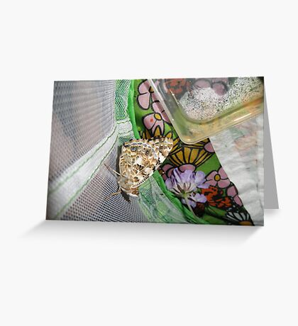 painted lady butterfly that we raised Greeting Card