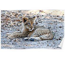 The lion cub -Luwanga Africa Poster