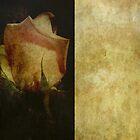 Vintage Rose by Mistyarts