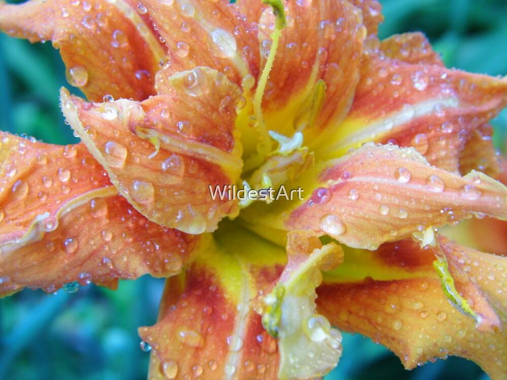 Refreshing Raindrops by WildestArt