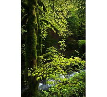 The Forest of the Grande Cascade Photographic Print
