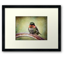 This is my spot, go find another one! Framed Print