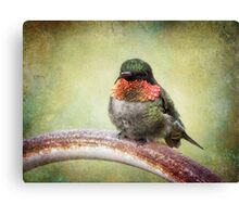 This is my spot, go find another one! Canvas Print