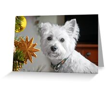 Christmas Star Puppy Greeting Card