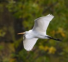 Bird on the Wing by Bryan Shane