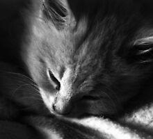 Kitty slumber by MatthewMPhotos