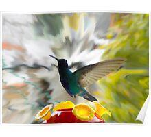 Hummingbird Series IX Poster