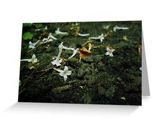 small petals Greeting Card