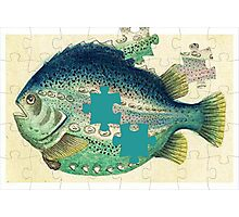 A puzzled fish Photographic Print