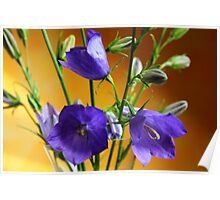 Balloon Flowers Poster