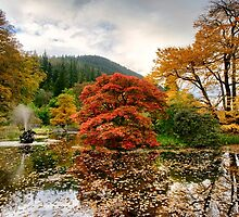 Autumn Garden by M.S. Photography/Art