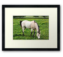 Just Equine! Framed Print