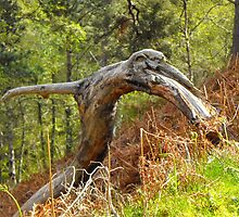 Prehistoric remains by alanf1