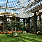 Inside the Longwood Conservatory by Laurel Talabere
