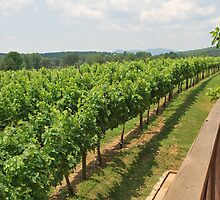Blackstock  Vineyards and Wineries by Tracey Hampton