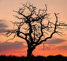 Sunset Tree by Brian Kerr