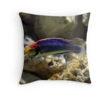 Rainbow Wrasse Throw Pillow