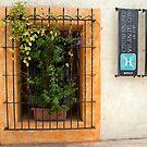 Centro Historico by phil decocco