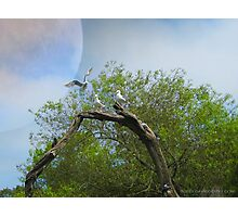 Gulls Arch Photographic Print