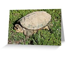 Common Snapping Turtle  Greeting Card