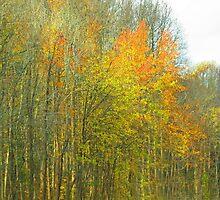 Golden Woods by Eileen McVey