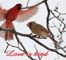 Love is kind by hummingbirds