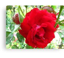 Ruby Red Splash Rose Canvas Print