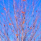 Almost Winter Tree by kahoutek24