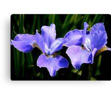 Irresistible Irises Canvas Print