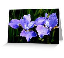 Irresistible Irises Greeting Card