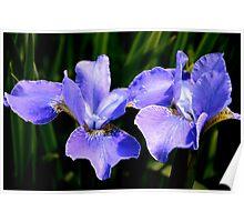 Irresistible Irises Poster