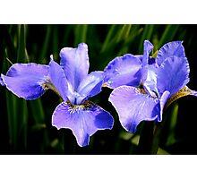 Irresistible Irises Photographic Print