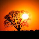 Mighty Oak Sunset by Sharon Woerner
