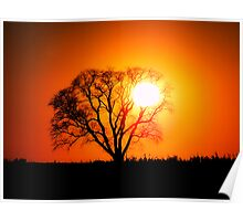 Mighty Oak Sunset Poster