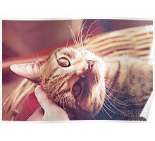 Smoochy Kitten Poster