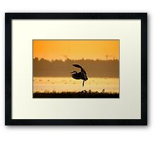 Great Blue Heron in early morning Framed Print