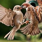 House Sparrows by alan tunnicliffe
